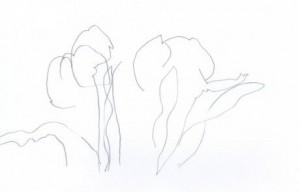 Tulpen - Blindes Konturen-Zeichnen