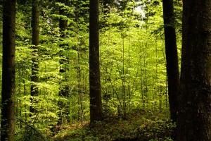 Original Waldfoto von Rainer Sturm, pixelio.de