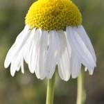 Feldblumen2