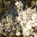 Weiße Blüten in der Sonne