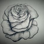 Skizzierte Rose