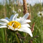 Nahaufnahme weiße Blüte