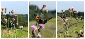 Schmetterling Collage