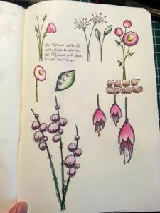 Skizzenbuch Blumen stilisiert