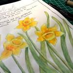 Goldener-Moment - Narzissen im Sketchbook