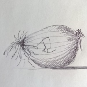 Sketch - Zwiebel