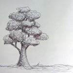 Sketch - Baum